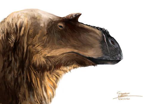 Juvenile Albertosaurus
