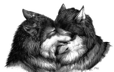 Nuzzling Wolves by CorvidaeArt