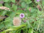 Flower :3