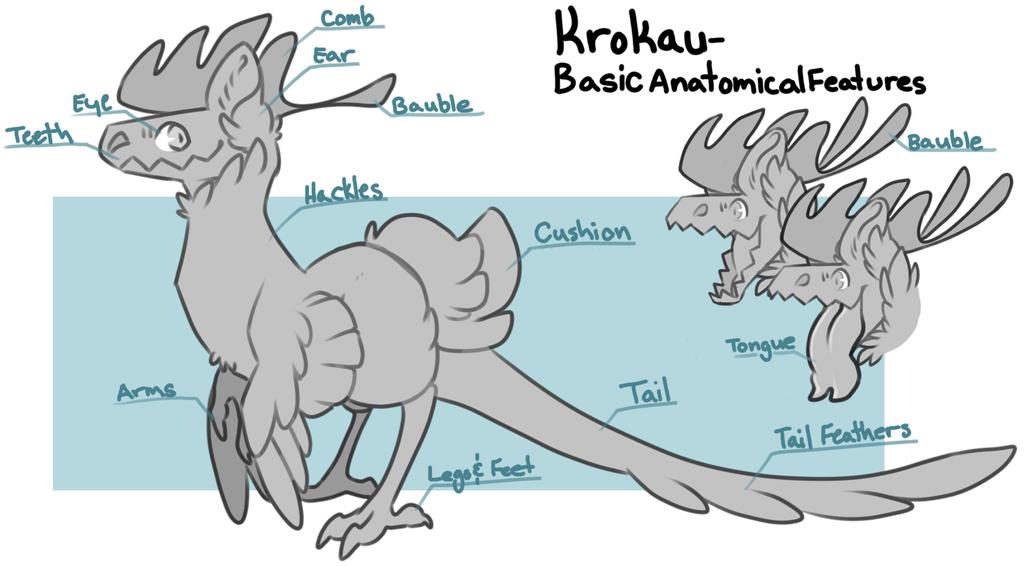 Krokau - Basic Anatomical Features by PudgeHen