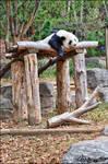 Panda - Sleep