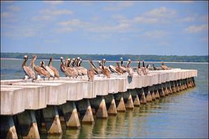 Pelican Hangout