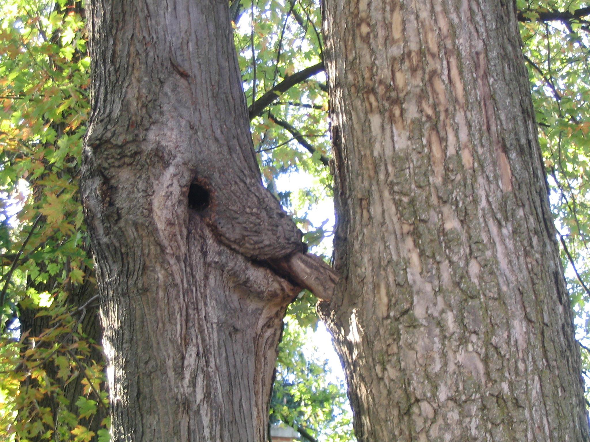 Tree Porn.
