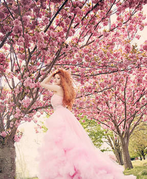 In the Cherry blossoms