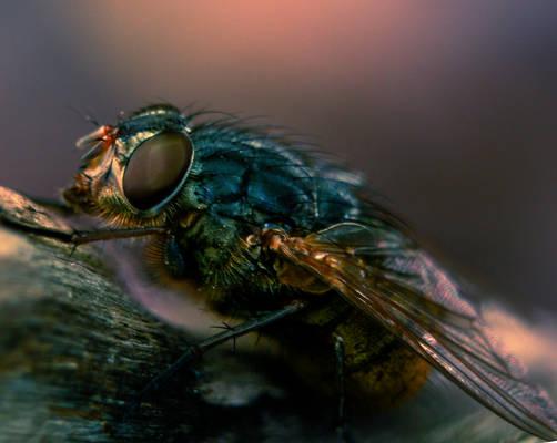 Macro fly