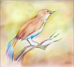 Little Bird by AlineMendes