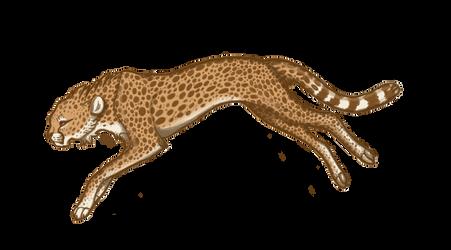 Cheetah's jogging