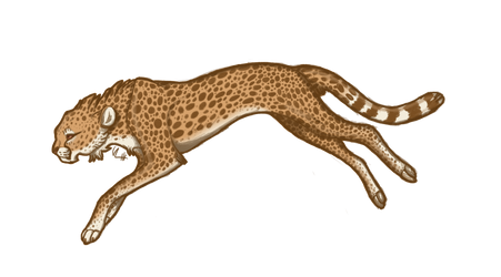 Cheetah's jogging by superlaky