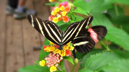 Butterflies by ItsJessykaa