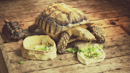 Turtles are so cute. :3 by ItsJessykaa