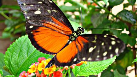 Closeup by ItsJessykaa