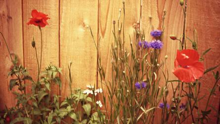 Garden by ItsJessykaa