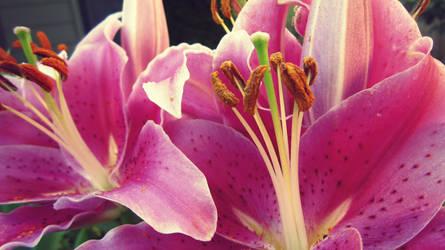 Lilies by ItsJessykaa
