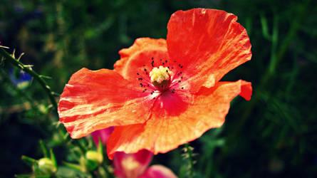 Wildflowers by ItsJessykaa