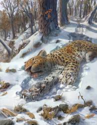 Dead Amur Leopard by Kunacheetah