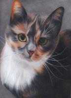Cat drawing by ahsr
