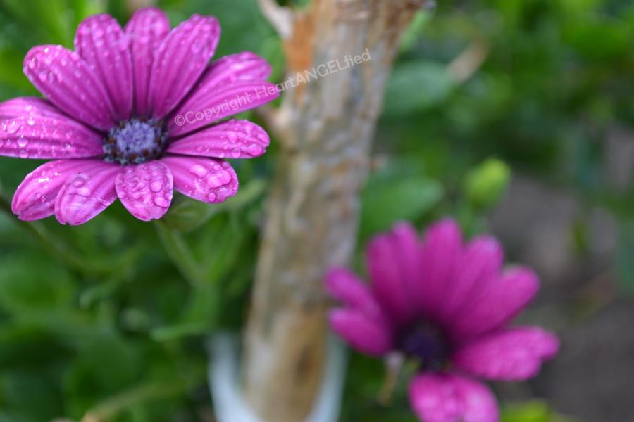 Blooming flowers !! by HeartANGELfied