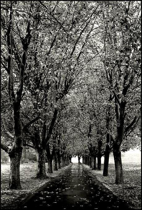 Trees near Gilroy by fotokultur