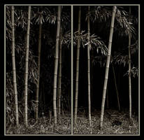 Big Bamboo in 2 panels by fotokultur