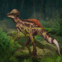 Commissoin: Pachycephalosaurus