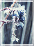 signs of winter_upd by March-Cat