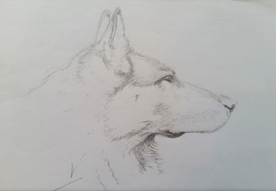 Dog Sketch - Esquisse de Chien by Tatooa2001