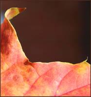 Red Leaf by aquifer