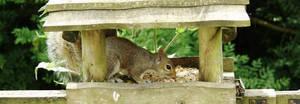 Tabletop Squirrel