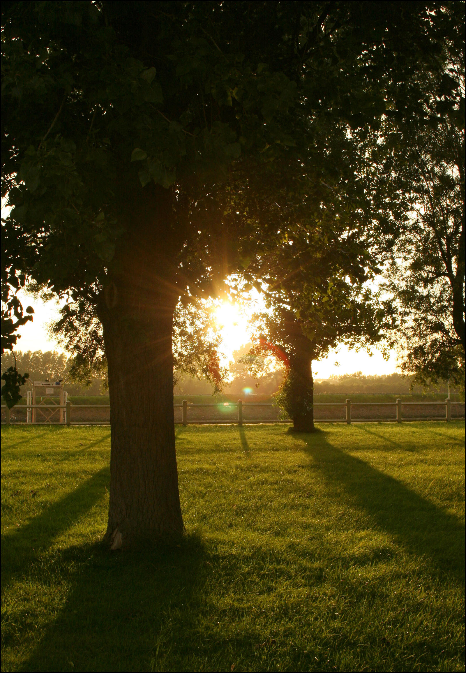 Sunset Trees by aquifer