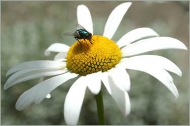 Fly Flower by aquifer