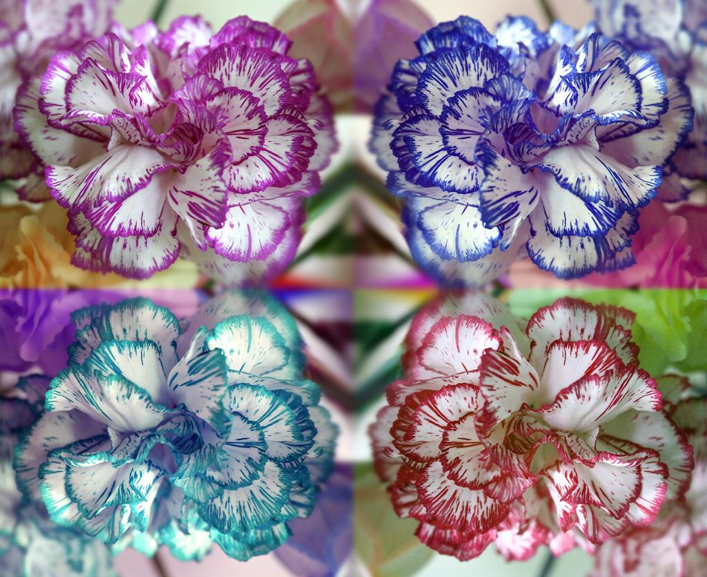 Flower Pop by aquifer