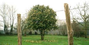 Forbidden Tree