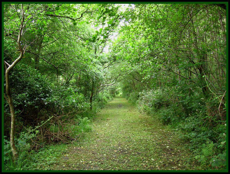 Long Path by aquifer