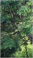 Long Tree by aquifer