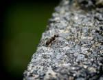 Hello Little Ant