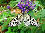 Summer Island Butterfly