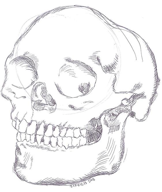 Skull by rabid-donkey