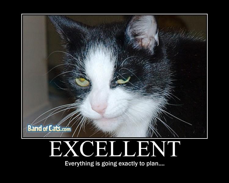 http://fc04.deviantart.net/fs70/f/2010/210/0/d/Evil_cat_by_Konfan2.jpg