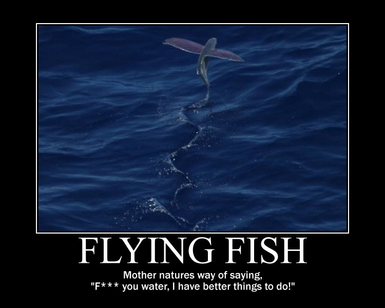 Fish Motivational Quotes: 1000+ Images About Inspirational Posters On Pinterest
