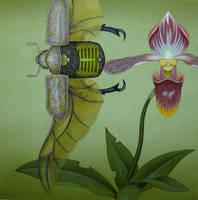 Beetle and the Lady's Slipper