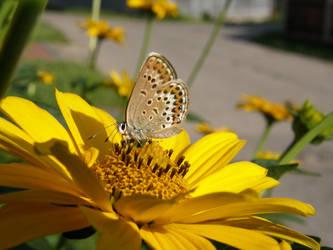 Butterfly... by DreamingRabit