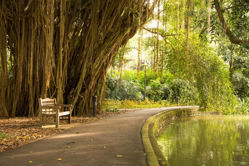 Botanic Garden by abdulhamid-alattar