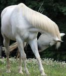 Horse Stock 03