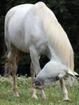 Horse Stock 04