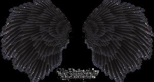 Black Angel Wing - Stock