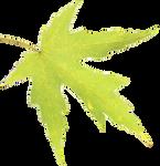 Leaf 01 PNG - Stock