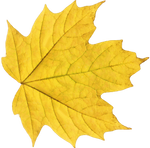 Leaf PNG 02 - Stock