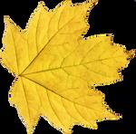 Leaf PNG 02 - Stock
