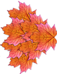 Fairy Leaf Wings 02 - Stock