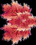 Fairy Leaf Wings 03 - Stock